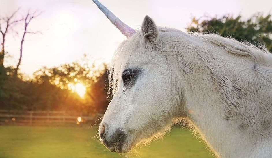 Help Us Rename Ureen the Unicorn